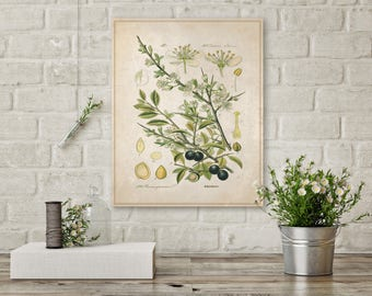 Black Berries, Berry Plant, Berries on Canvas, Plants on Canvas, Botanical Canvas, Vintage Art, Nature Canvas, Wall Decor, Wall Art