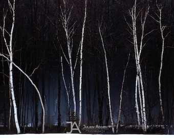 BIG SIZE Photography - Quebec - Winter - Snow - Trees - Spring