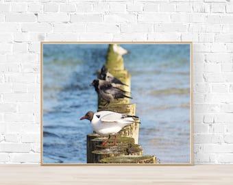 Seagull Art Photo Painting 45 x 30 cm