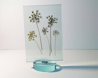 Pressed Queen Anne's Lace/Pressed Flower Art/Glass Swivel Frame/ Home Décor/Unique Gift