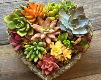 Heart Shaped Handcrafted Succulent Arrangement