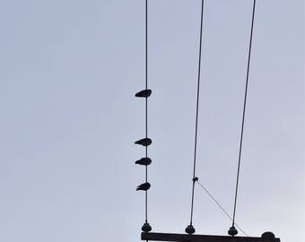 Electrical parallel line with birds photography