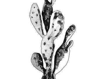 Cactus print - mounted