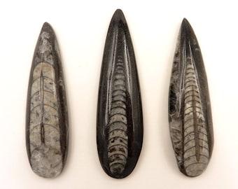 Orthoceras | Orthoceras Lot | Orthoceras Fossil | Orthoceras Cabochon | Fossil Cabochon | Polished Orthoceras | Morocco | 45 grams