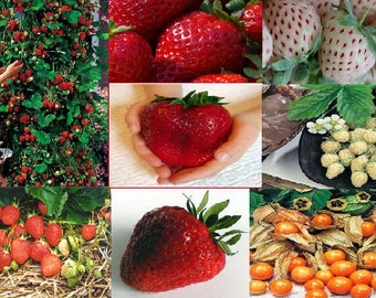 Strawberry seeds (7 Variety)