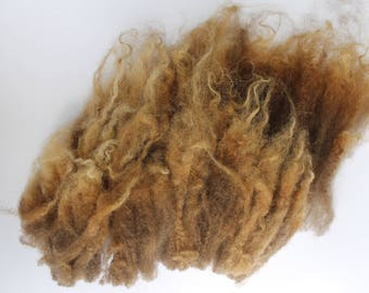 Raw Shetland Lambs Fleece Super fine Hand Spinners and Felters