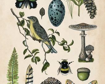 Naturalist Collection II