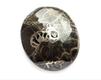 Ammonite cabochon 32x27x3 mm