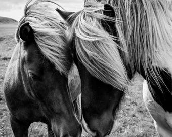 Instant download poster print icelandic ponies horses wall art
