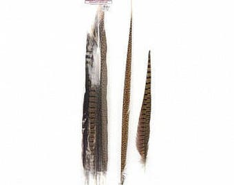 """16-30"""" Natural Ringneck & Golden Assorted Pheasant Tail Feathers 10PC/PKG B574N-10"""