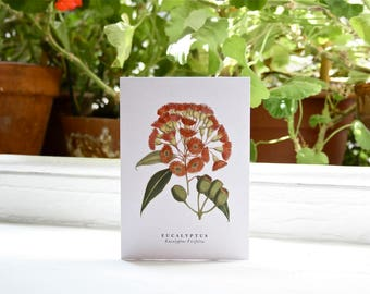 Eucalyptus: Botanical Print - Blank Greeting Card