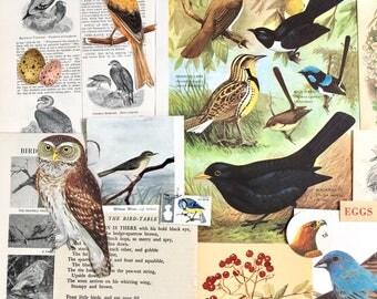 Birds, Eggs & Nests Scrapbooking paper   Vintage Ephemera   Paper Pack   Nature Journal   Mixed Media Art   Bird collage   Bird illustration