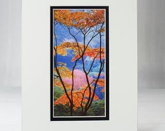 Stained Glass, Japanese Garden, Matted Prints, 8x10, Fine Art, Photography, Trees, Calm, Rare, Hand Cut Mats, Zen