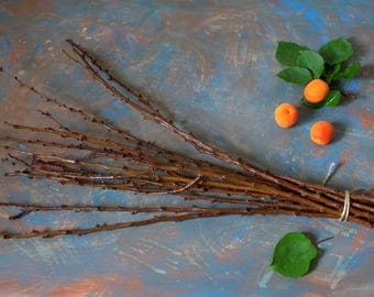 Bunch of Real natural branches of the apricot   for  home decor, creativity, DIY