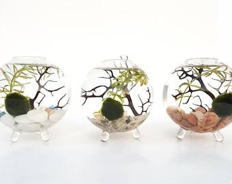 Marimo Moss Ball Terrarium Globe Aquatic Live Plant DIY Kit for Office Desk Accessories, Home Decor, Best Friend Gift, Valentine's Day Gift