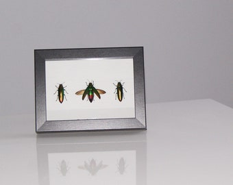 Insect framed 3 insects
