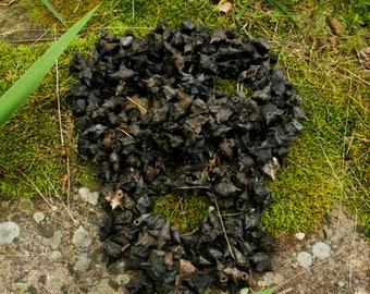 Devil Pods aka Bat Nuts