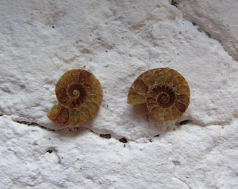 Ammonite. 2 Pcs. S0583