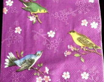 Birds of the Islands purple background paper towel