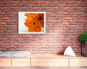 8x10 Macro Orange Flower Fine Art Print