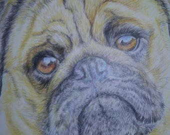 "Coloured Pencil Sketch ""Pug"" Print including mount by Sue Rathbone-Britch."