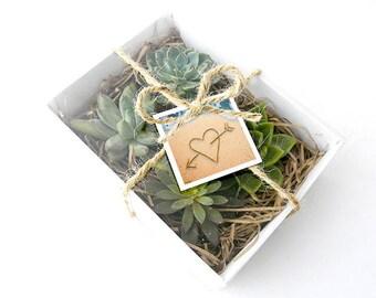 La Boîte à Macarons Succulente Blanche et Corde Naturelle : cadeaux aux invités original, cadeau de mariage nature, baptême, entreprise