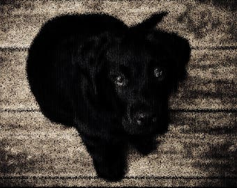 Puppy Photography Textured Background Instant Download