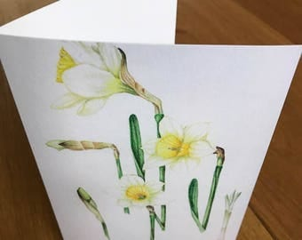 A6 Greeting Card Daffodils (Blank inside)