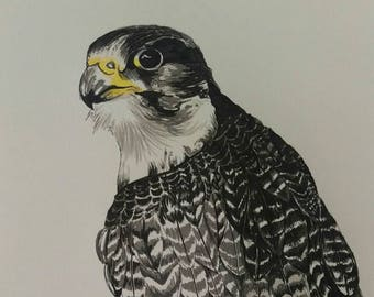 """Peregrine falcon, bird of prey Giclee art print from original pen and ink drawing by Ruth Dagger in 8""""x10"""""""