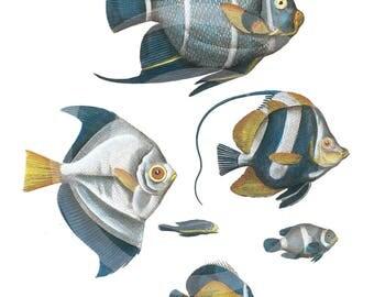 Blue Fish, Fish, clipart Fish, Fish Download, Fish clipart, Fish Printable, Fish Blue, Fish Ephemera, Vintage Art, Fish Wall Art, Fish Art
