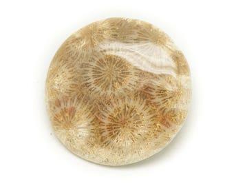 No. 13 - Cabochon stone - coral fossil round 37mm - 8741140006515