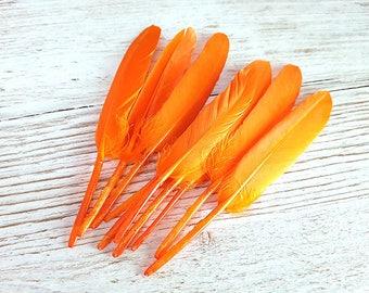 Set of 10 long orange feathers