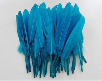 set of 10 turquoise blue feathers 10-15cm