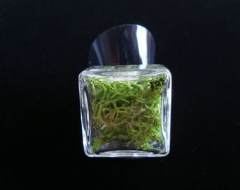 Ring square and flat glass filled with real Moss stabilized