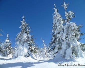 Poster à partir d'une photographie de Céline Photos Art Nature d'un paysage enneigé