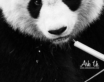 Portrait of a panda and bamboo black and white poster