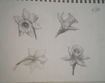 Daffodil Study - Original Drawing