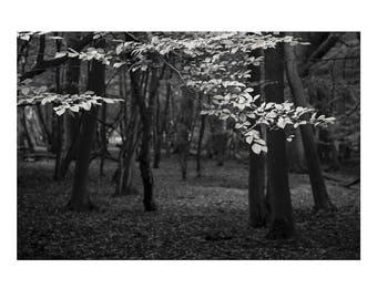 Walk In The Woods 01