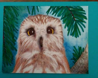 Colored owl 5x7 printed greeting card