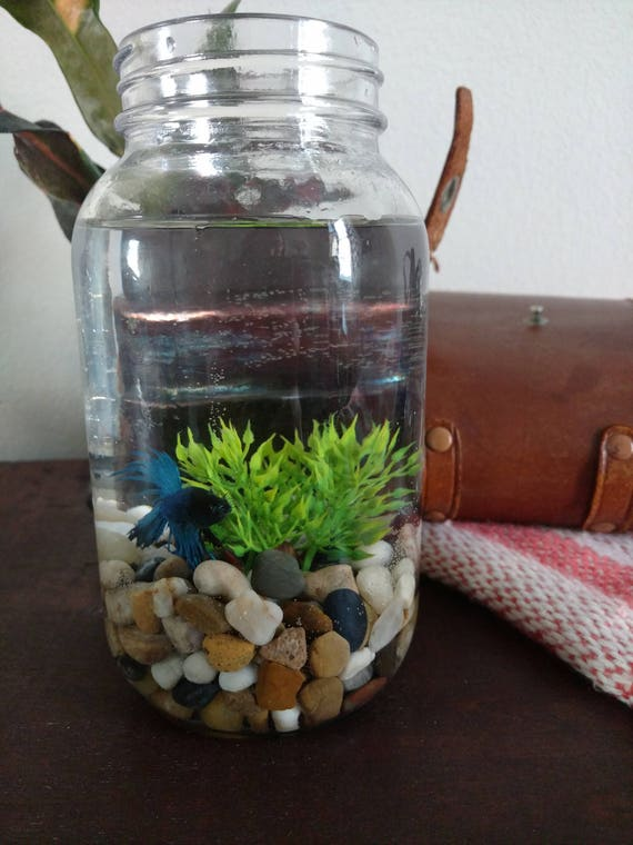 Decorating a betta fish bowl for Beta fish bowl
