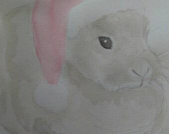 Lapin Noël/Santa Bunny