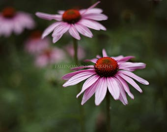 Time to stop and smell the flowers, Flower Photography, Fine art prints, Art print, Wall art, Home Decor