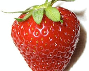 Strawberry Candy Flavor Oil (1oz)