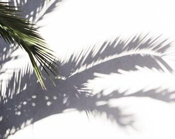 Palm Tree Print, Palm Tree Shadows, Shadow Play, Minimalist, Archival Print, Minimalism, Modern photography, Palm Tree, Beach, Los Angeles