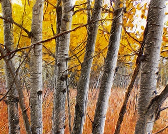 Birches At The Metroparks