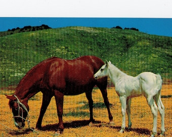 Vintage Horses in Field Postcard | Lusterchrome Horse Photograph Card Foal White and Brown | Nature, Animals, Animal | Paper Ephemera