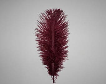 Ten ( 10 ) maroon ostrich feathers first grade 23-25cm