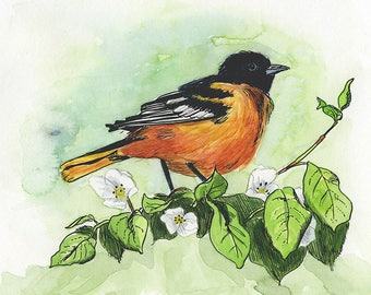 "Bird Art: Baltimore Oriole 8.5x11"" Archival Print of Watercolour Painting"