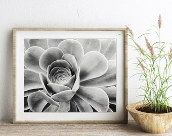 Succulent print, black and white, botanical print, nature photograph, sedum plant, living room art, gray wall art 'Sedum Rose'