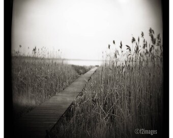 Wander; photography, fine art photography, landscape art, wall art, sepia art, square art print, by F2images